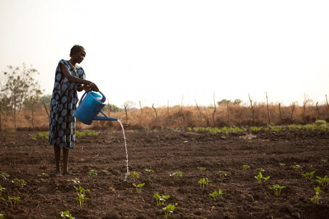 A member of a community farming group set up by Save the Children waters her crops in Pagak, Upper Nile state, South Sudan (Colin Crowley/Save the Children)