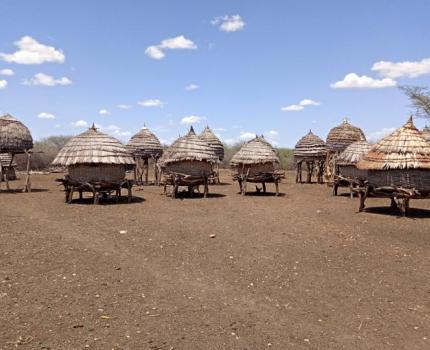 Fears grow as locusts swarm towards South Sudan