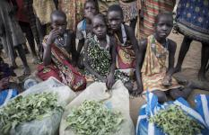 The only item that is in abundance is Ekamongo, small, bitter, wild green that are boiled, mashed and have to be mixed with oil and salt, - the only option for starving children in greater Kapoeta, South Sudan.